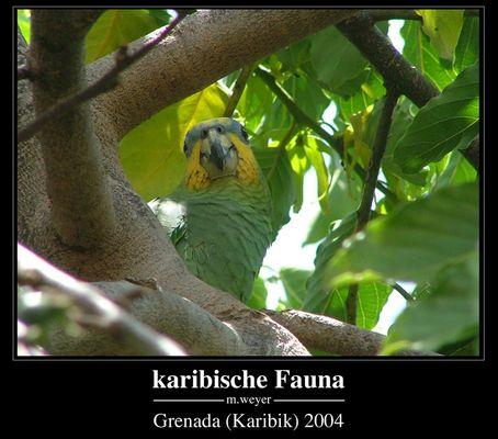 karibische Fauna