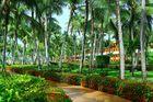 Karibisches Garten