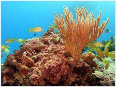 Karibisches Meer II