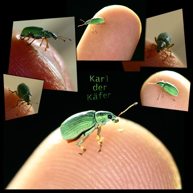 Karl der Käfer
