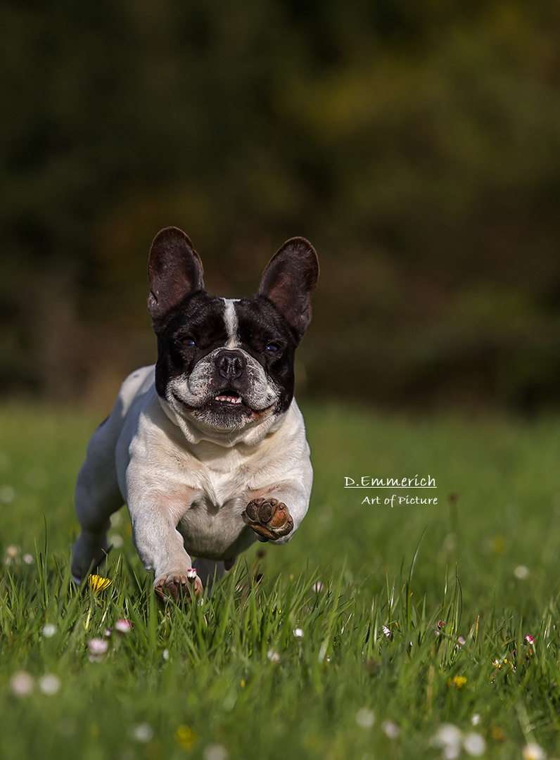 Karla on the run....