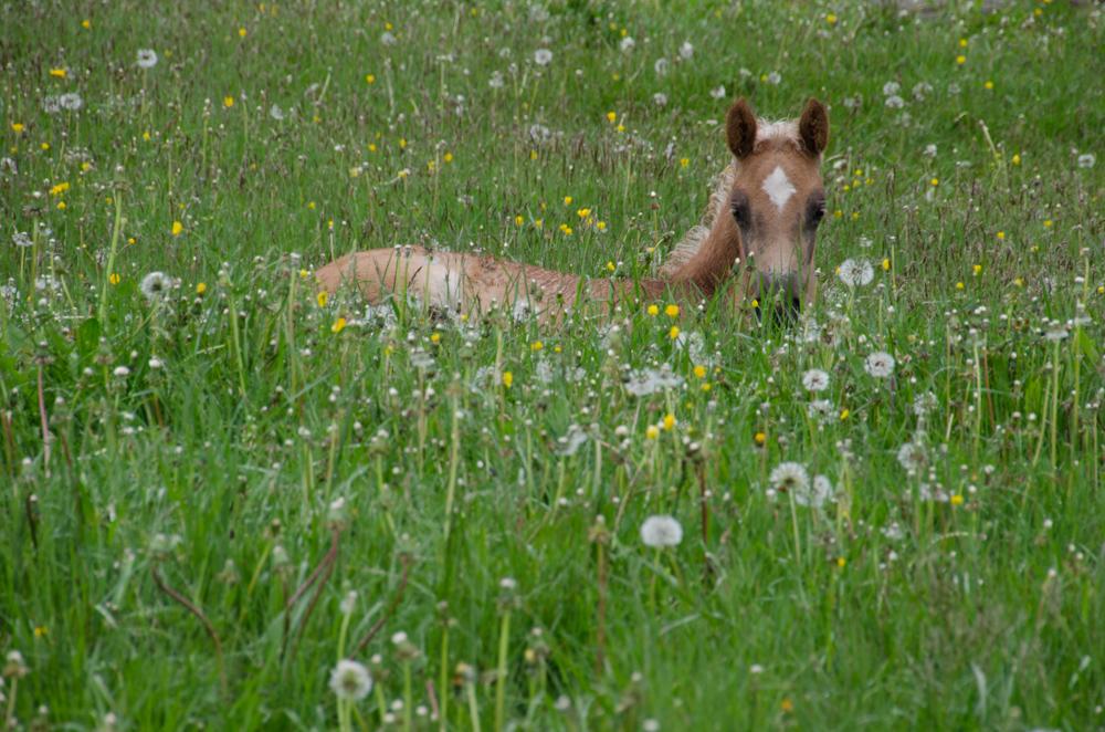 Karo versteckt sich im Gras