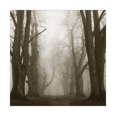 Karoliallee im Nebel