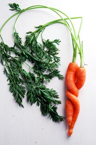 Karotten-Liebe