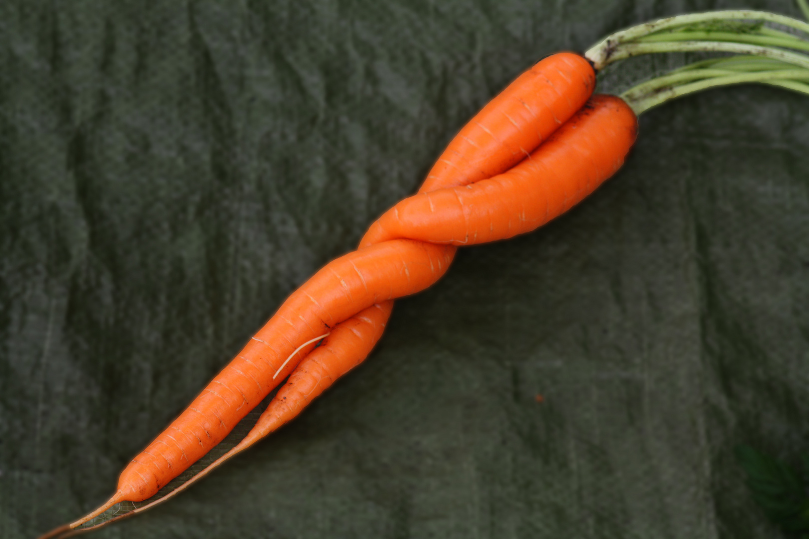Karottentango