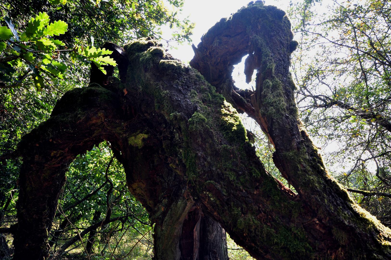 Karstwanderweg 101 Baum mit Lebenswillen