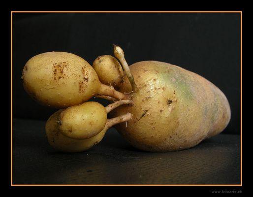 Kartoffeln mal anders