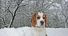 Karuso im Schnee1