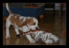 Karuso mit Tiger