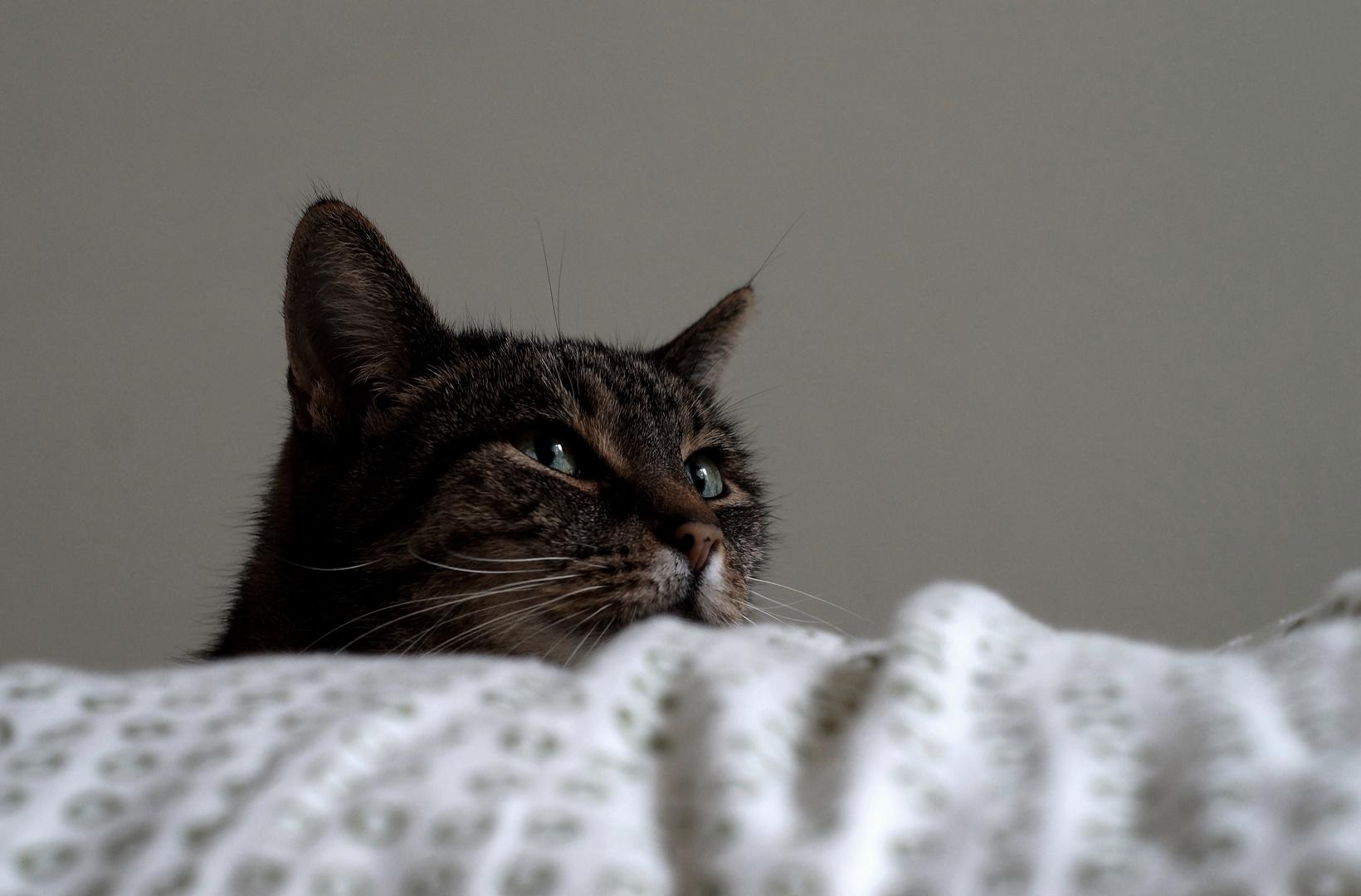 Kascha Katze
