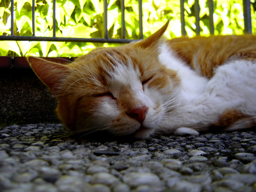 Kasimir das Katzentier ; )