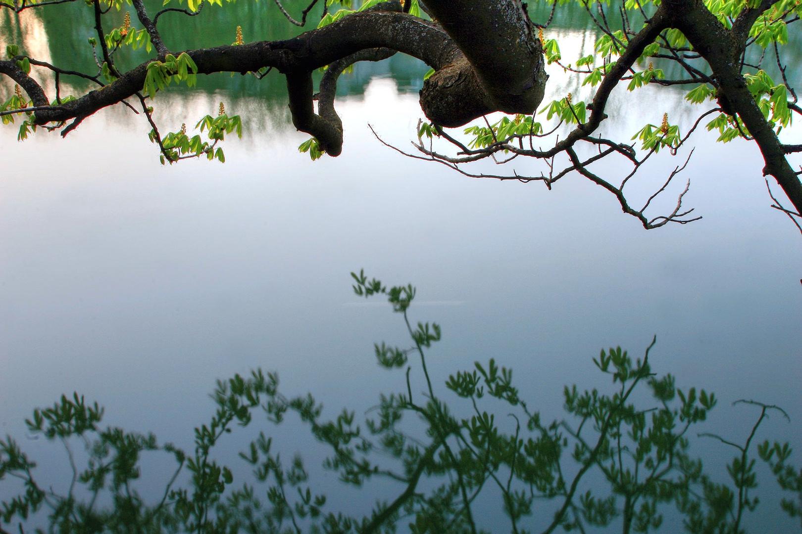 Kastanien im April spiegeln sich in der abendlichen Isar