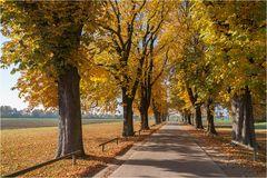 Kastanienallee im Herbst
