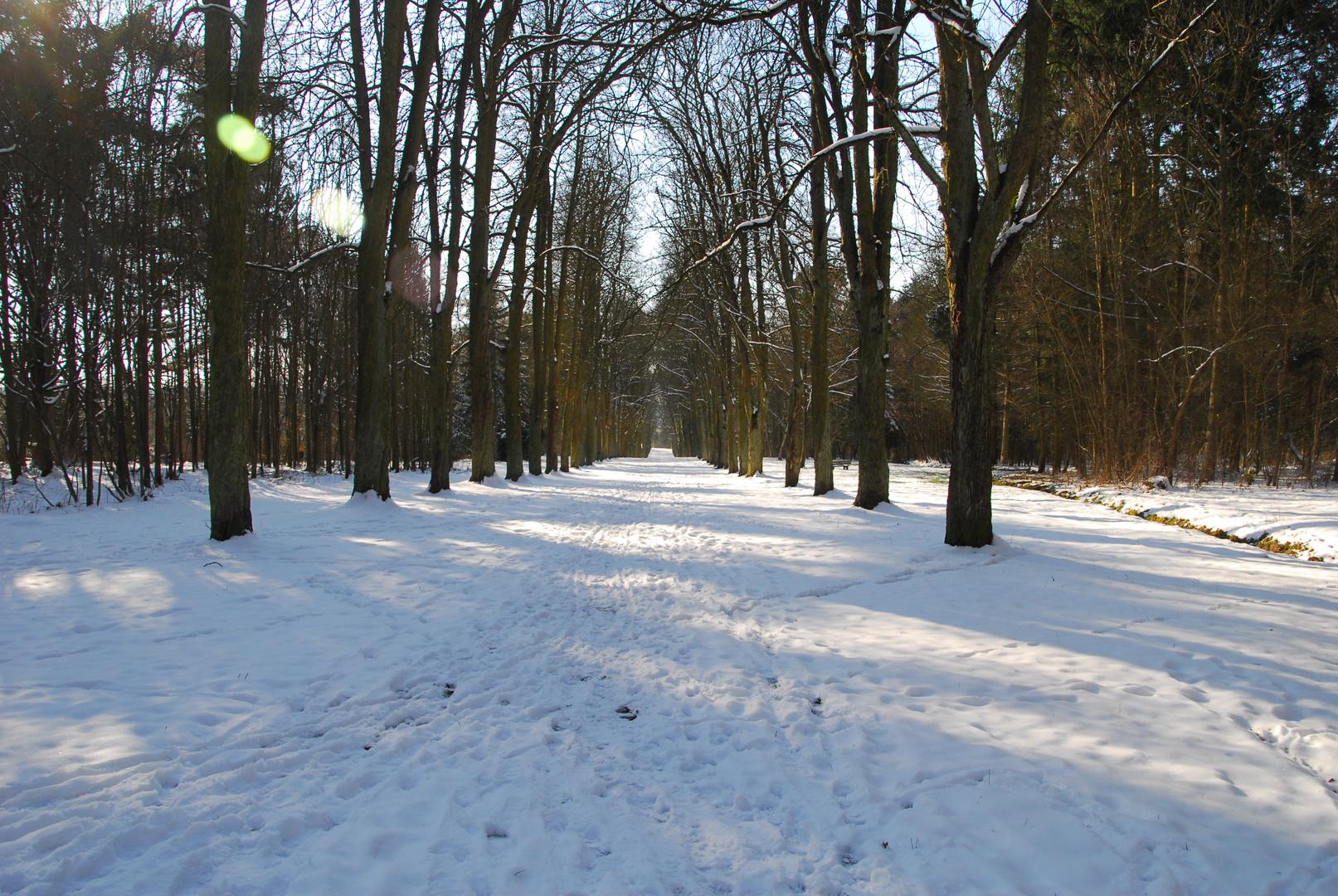 Kastanienallee im Winter