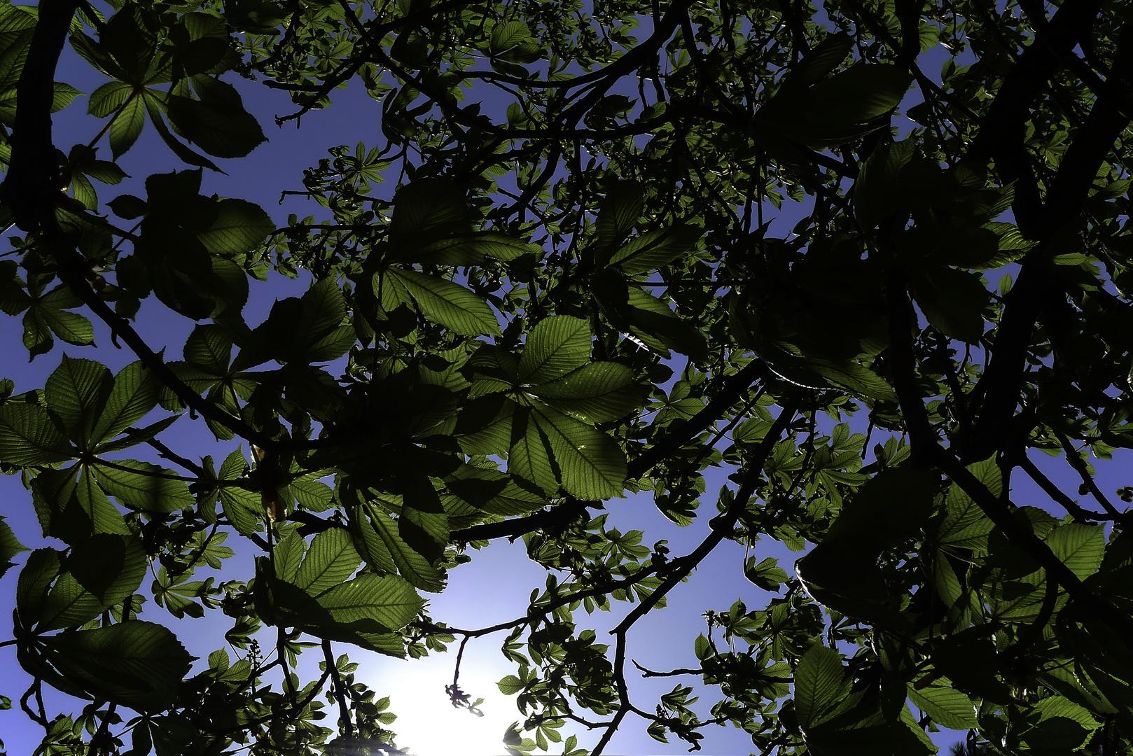 Kastanienblätter