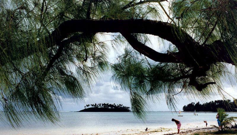 Kasuarinabaum am Muri Beach