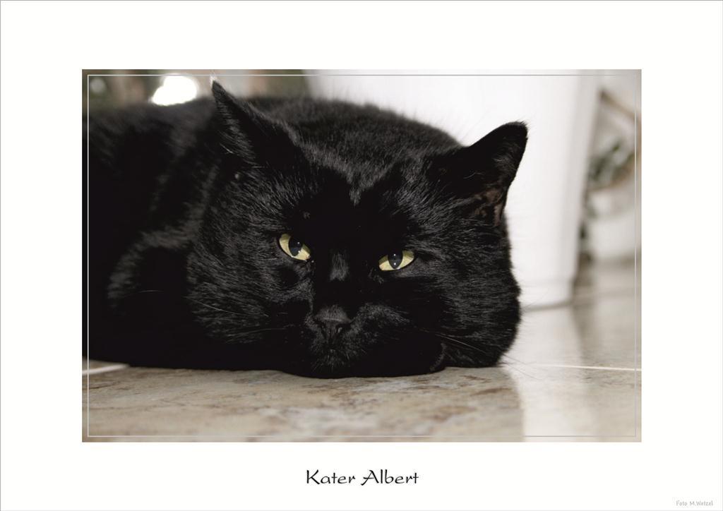 Kater Albert