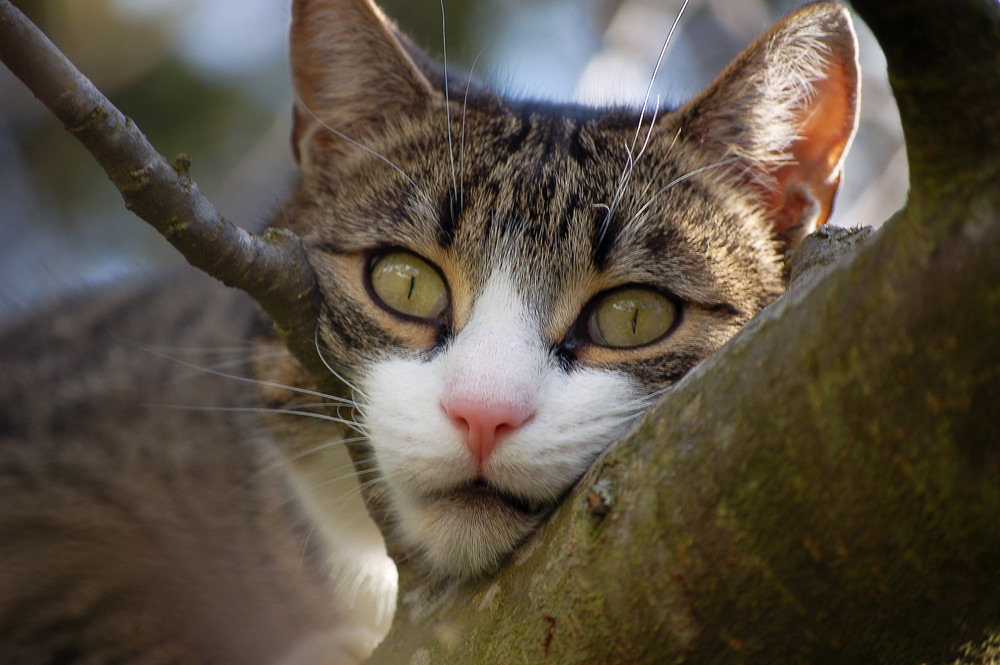 Kater Findus in seinem Lieblingsbaum