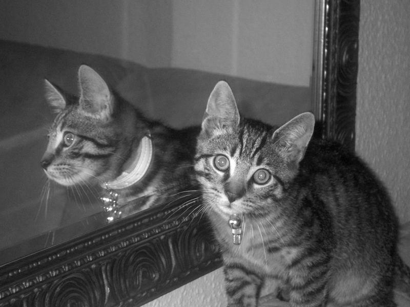 Kater im Spiegel