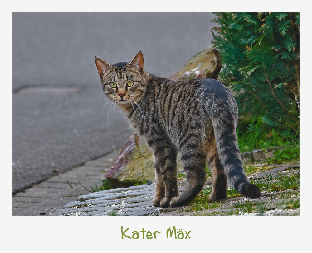 Kater Mäx