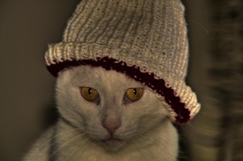 Kater mit Hut