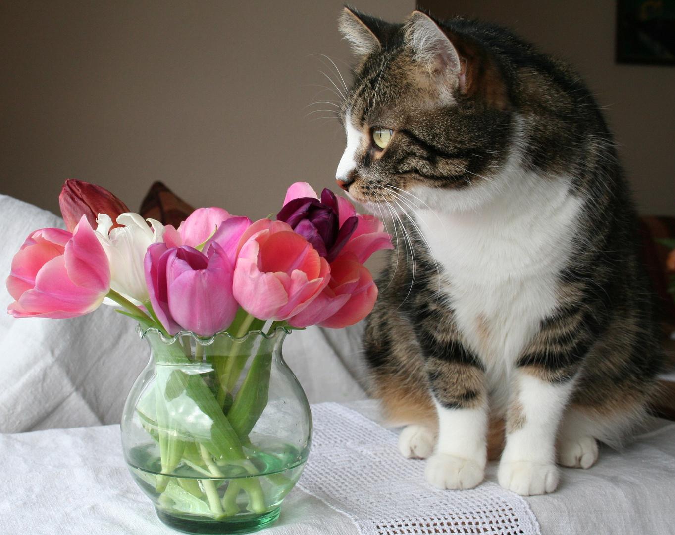 Kater mit Tulpen