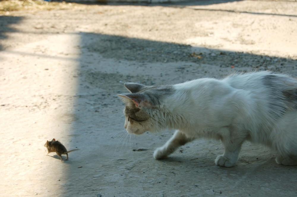 Kater und Maus
