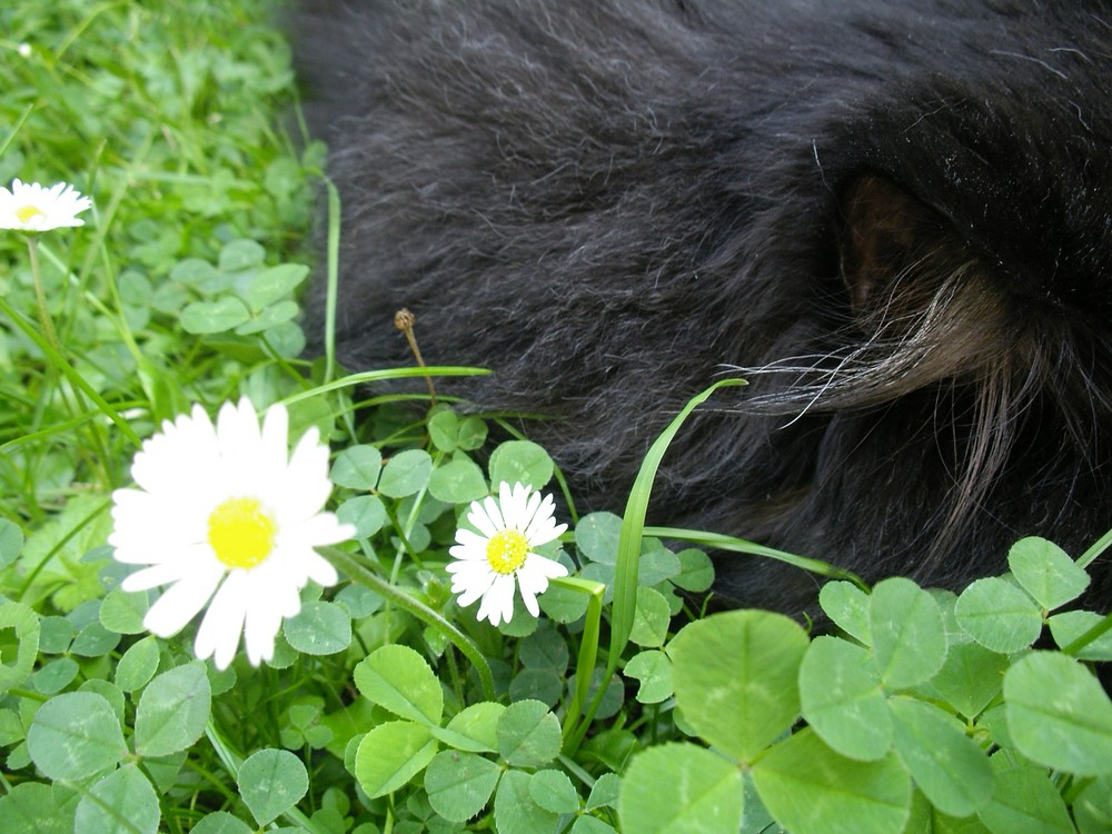 Katerchen hört das Gras wachsen :-)