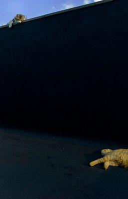 katertierchen - trockenschwimmer #03