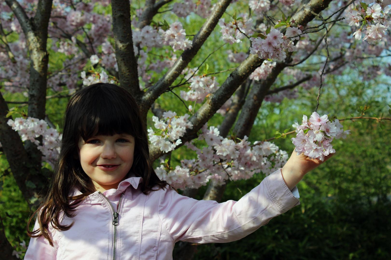 Katha und die Kirschblüten