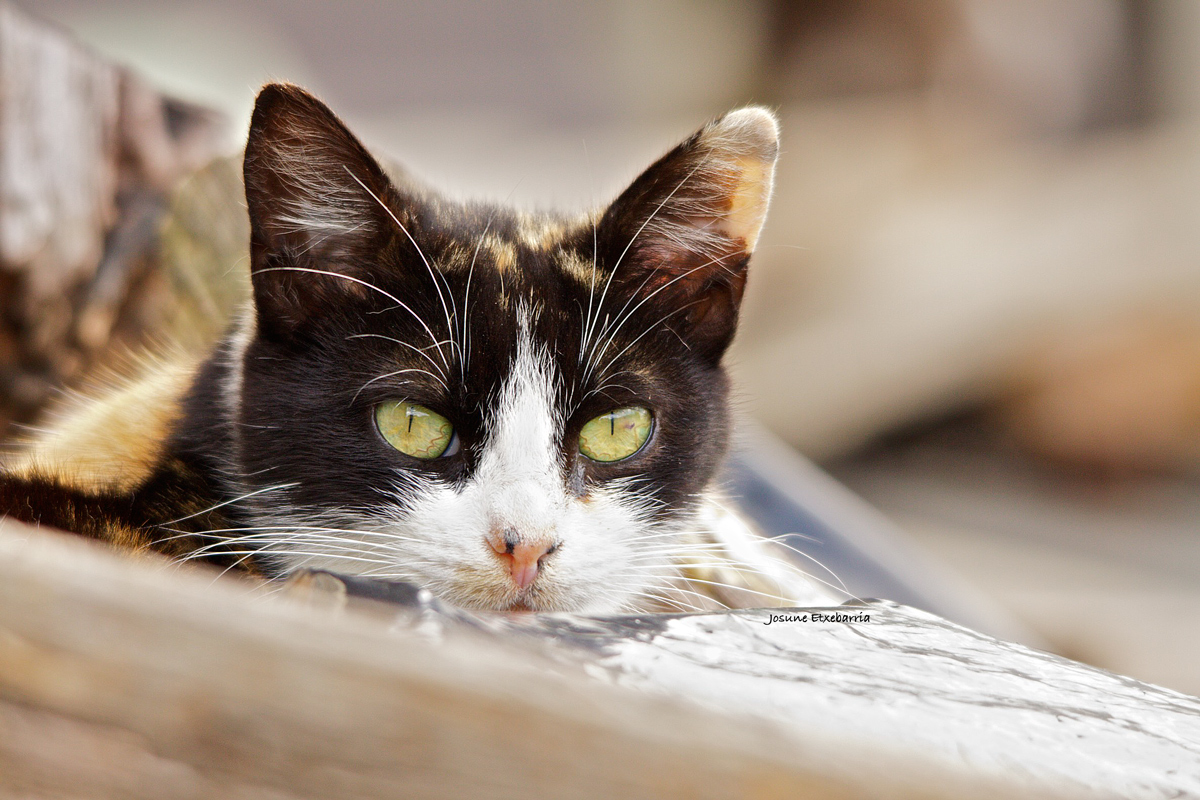 Katua / El gato (Dedicada a GRA)