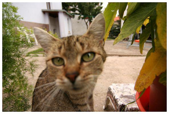 Katz', du hast den Mindestabstand nicht eingehalten!