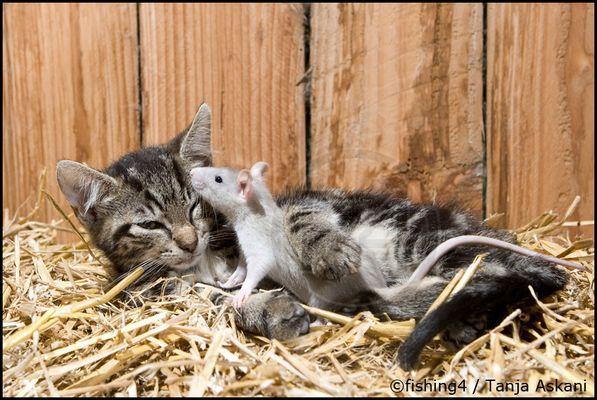 Katz & Maus