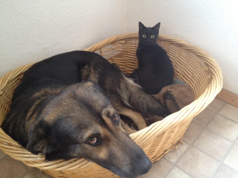 Katz und Hund