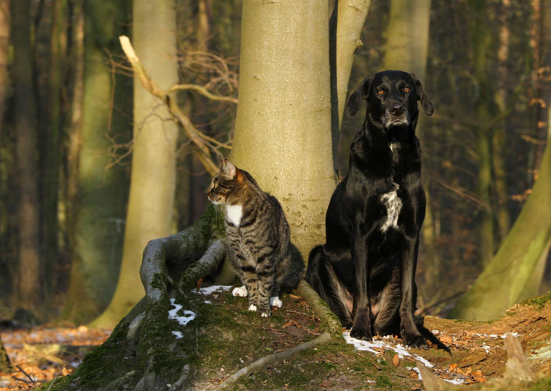 * Katz' und Hund...