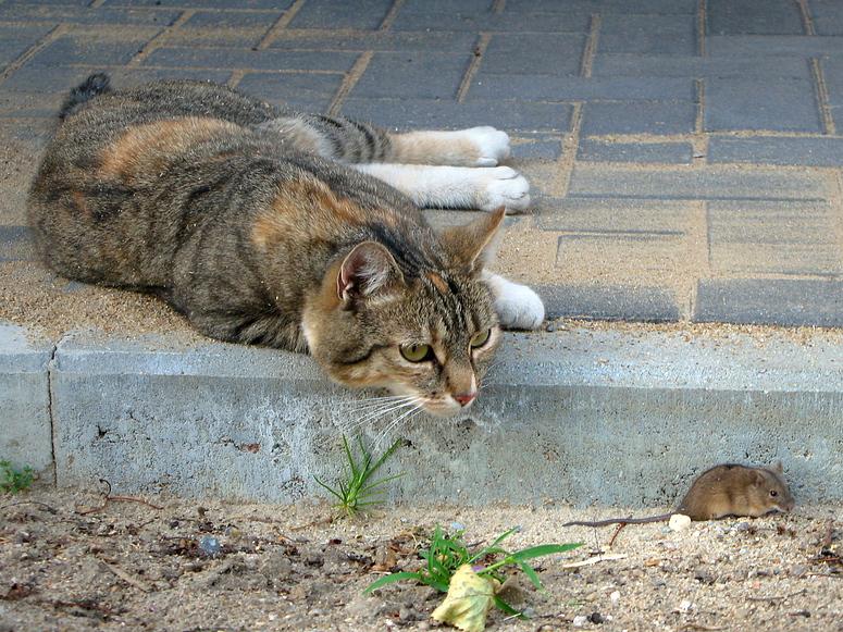 Kartenspiel Katz Und Maus