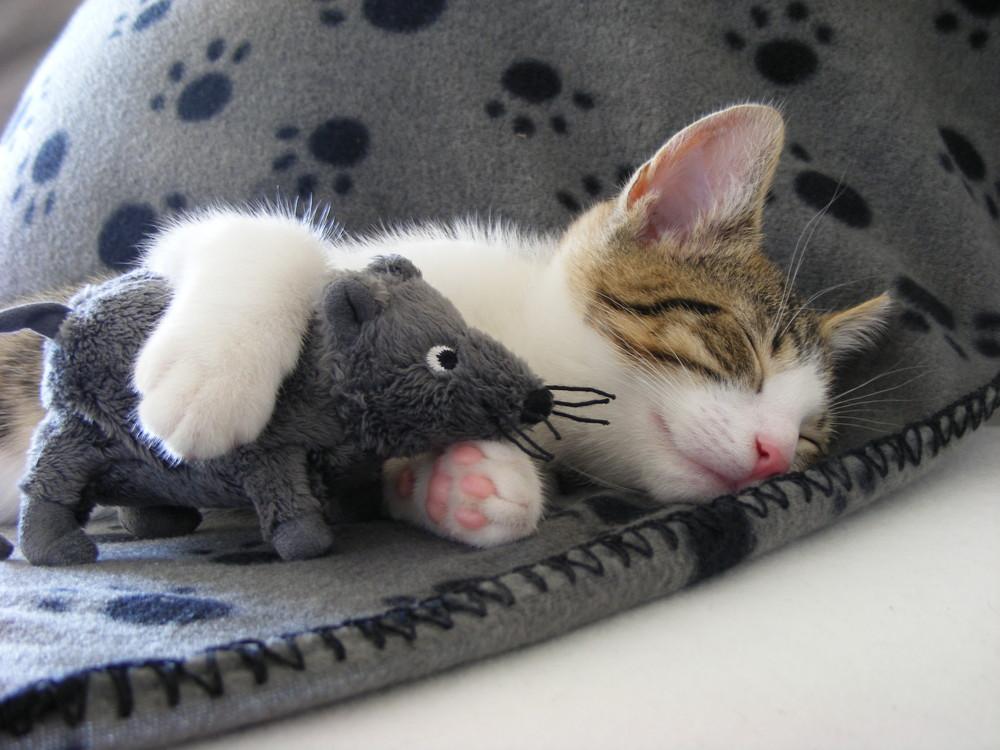 Katz und Maus :-)