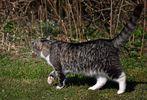 Katz und Maus - Der Jäger und seine Beute