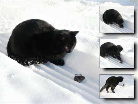 Katz und Maus die Zweite