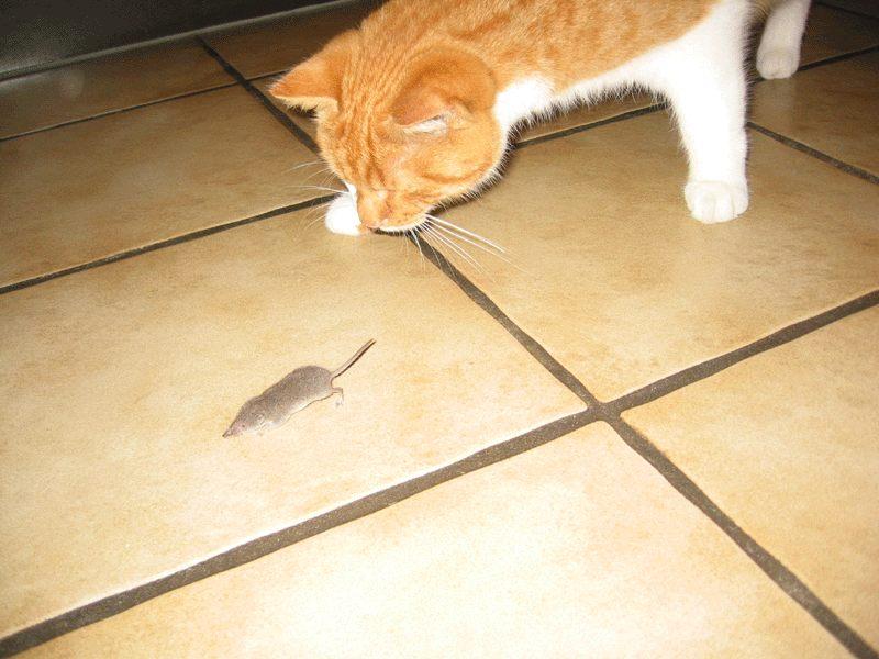 Katz und Maus   ....   nicht erwischt!!!