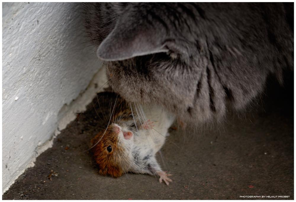 Katz Und Mausspiel