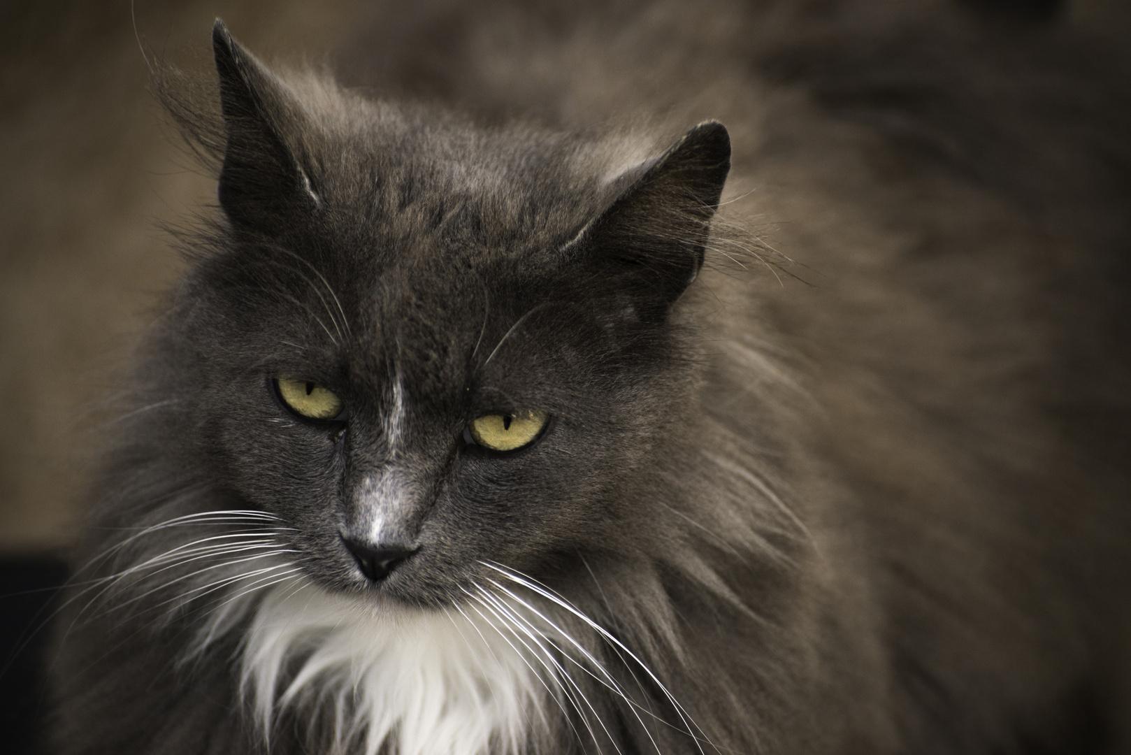 Katze (01)