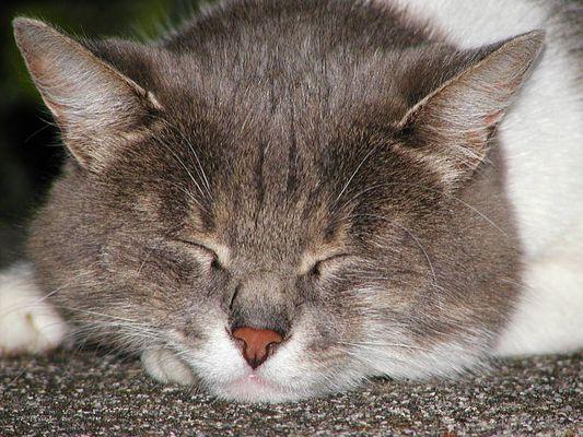 Katze 01, Model eingeschlafen