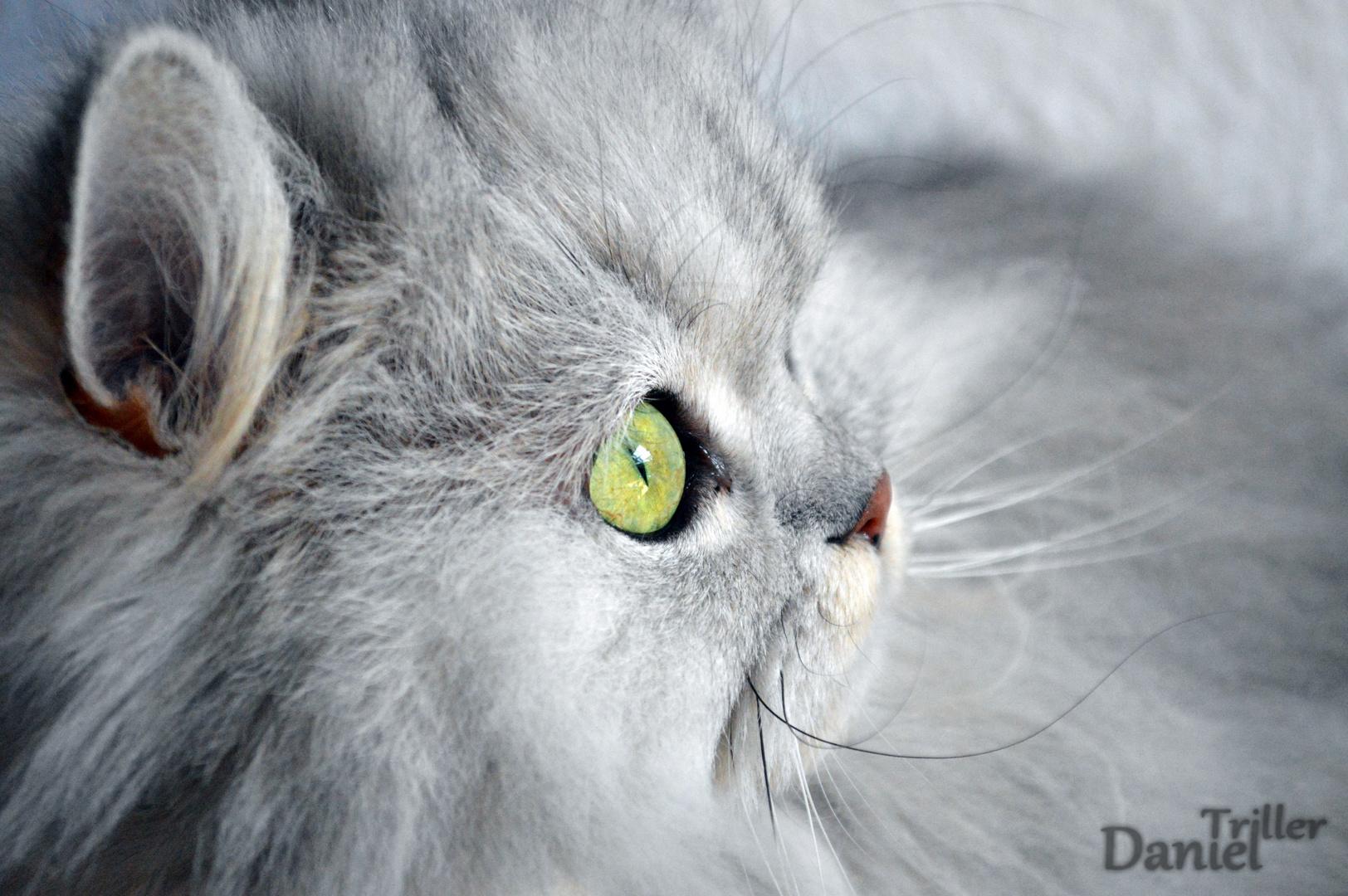 Katze #1
