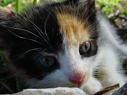Katzé