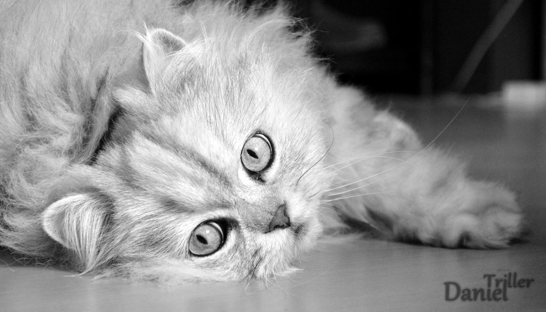 Katze #2