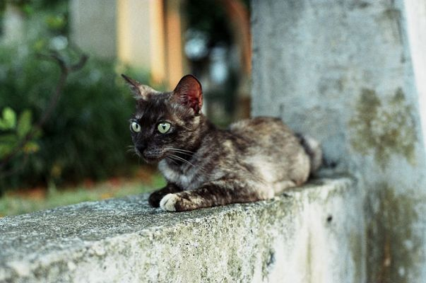 Katze (2) Naha, Okinawa