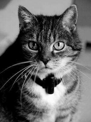 Katze.