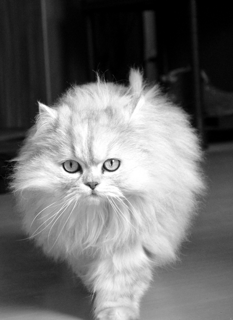 Katze #3