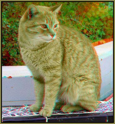 Katze [3D Anaglyphe]